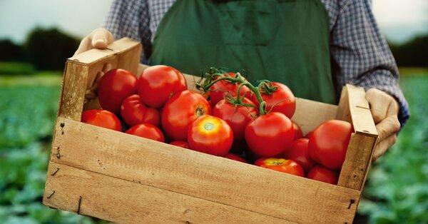 Jaké mají rajčata vitamíny? Překvapí vás, že jsou skvělé na prostatu